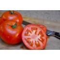 بذر گوجه فرنگی سپاهان